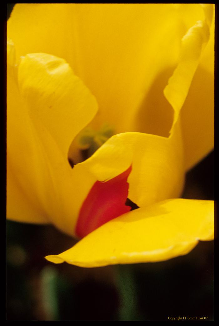 flower9696