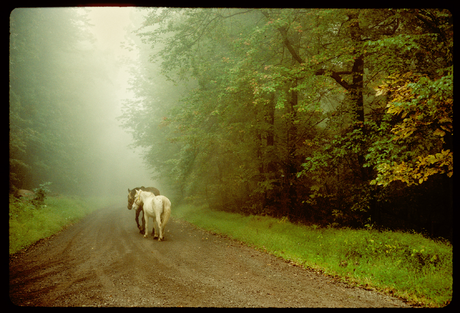 horses on foggy bucks county road ©h. scott heist 09