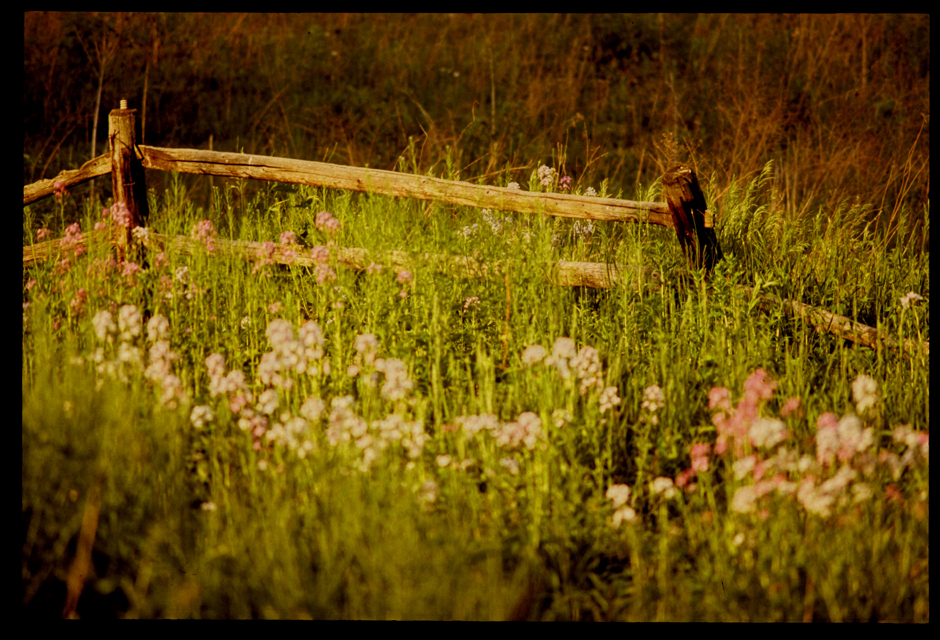 flowers and country fence ©h. scott heist 09