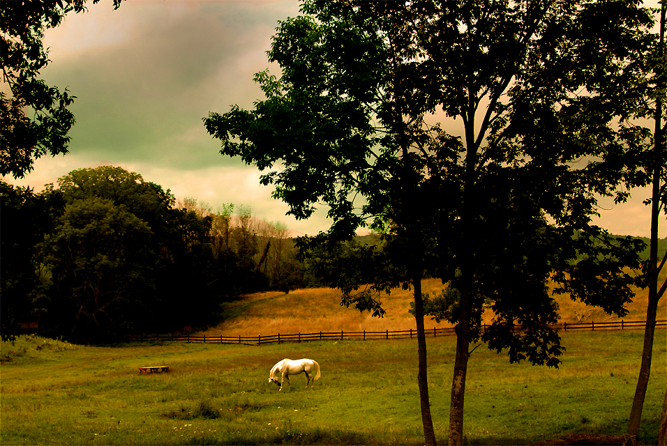white horse on autumn bucks county farm ©h. scott heist 09