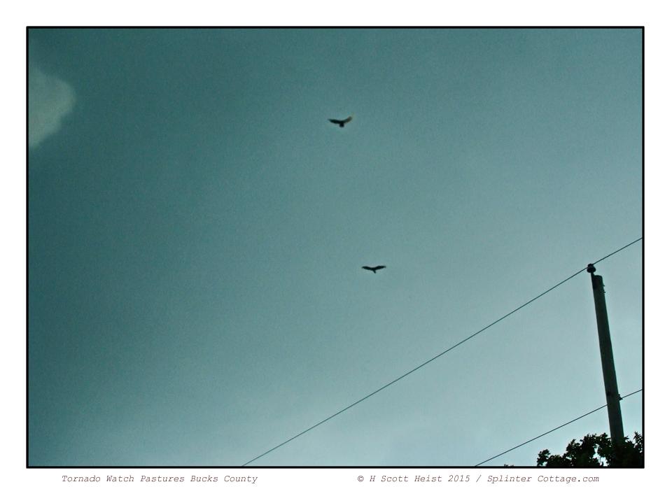 ©H.Scott-Heist-15--15-3702